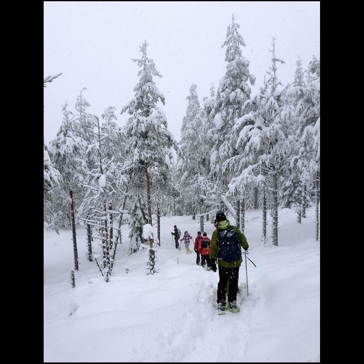 Snow shoe walk in Rättvik