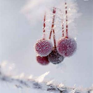 © fotoakuten.se, Jul i samverkan