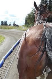 Four friends - Come, meet Sweden and the Swedish horses. A journey in time and space.