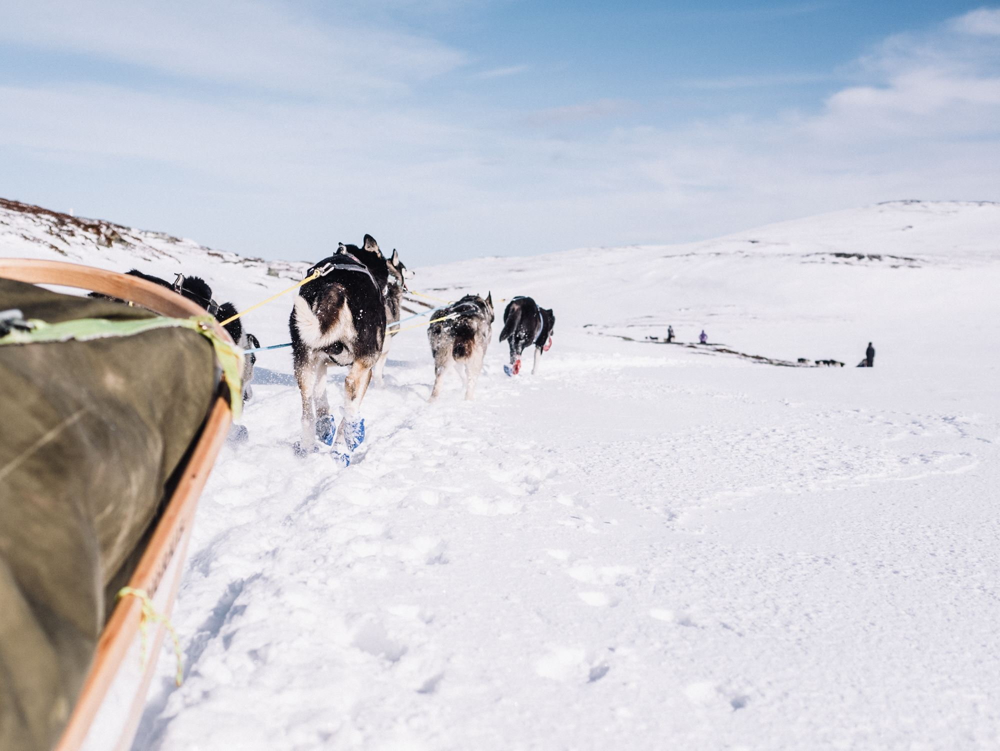 Trasti & Trine 5 days dog sledding tour