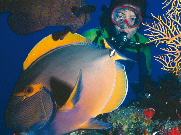Plongée d'Exploration (pour plongeur certifié avec équipement fourni et encadrement)
