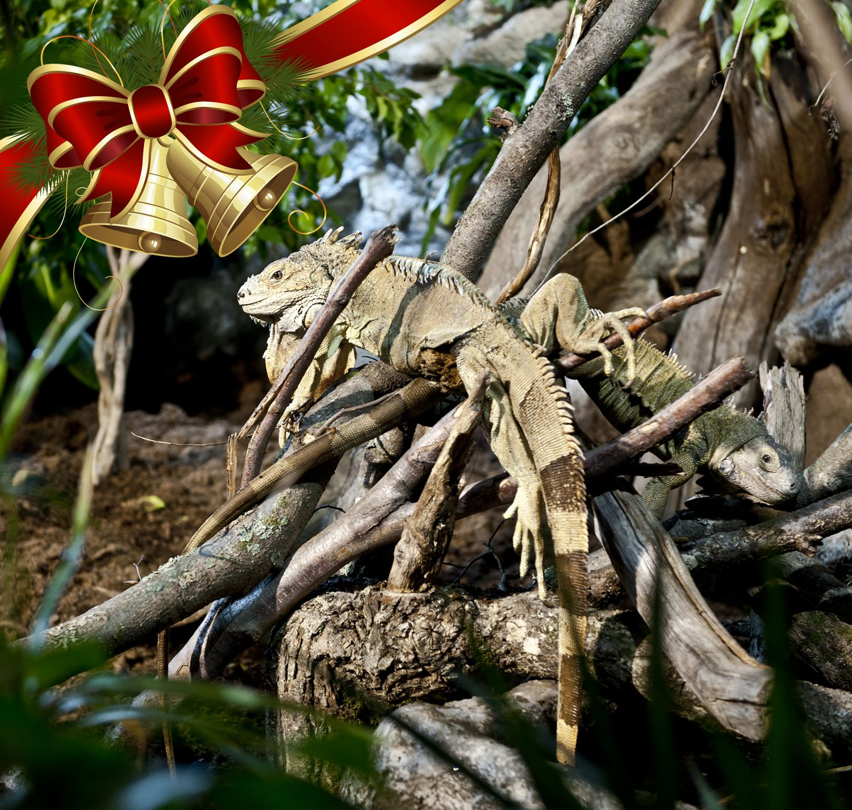 Jullovsöppet på Blekinge Exotiska Värld