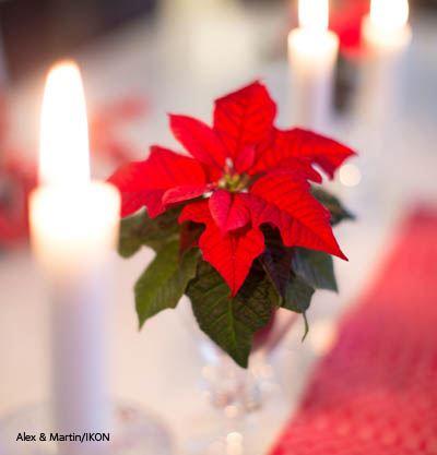 Weihnachtsmesse in Odensjö