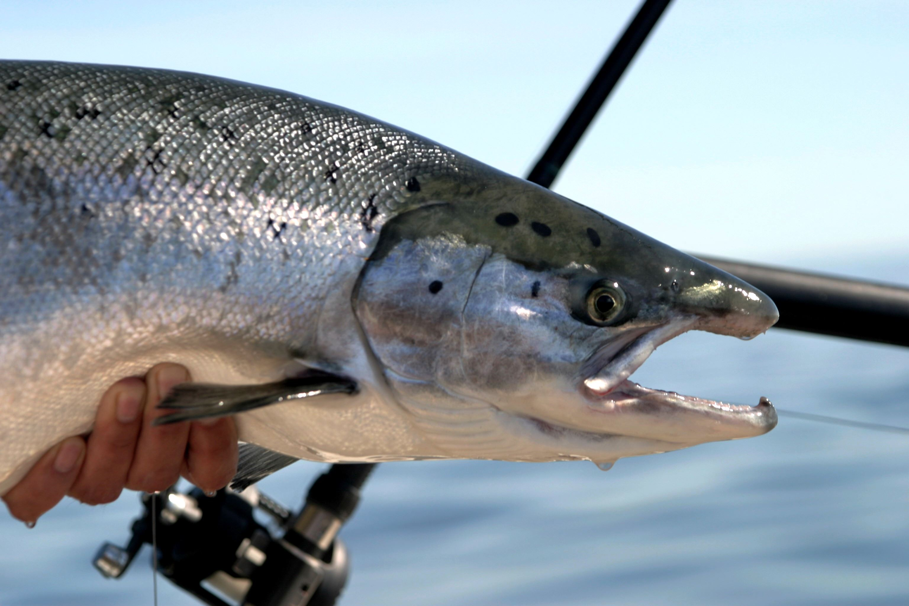 Fiskekort Hammaruddakortet