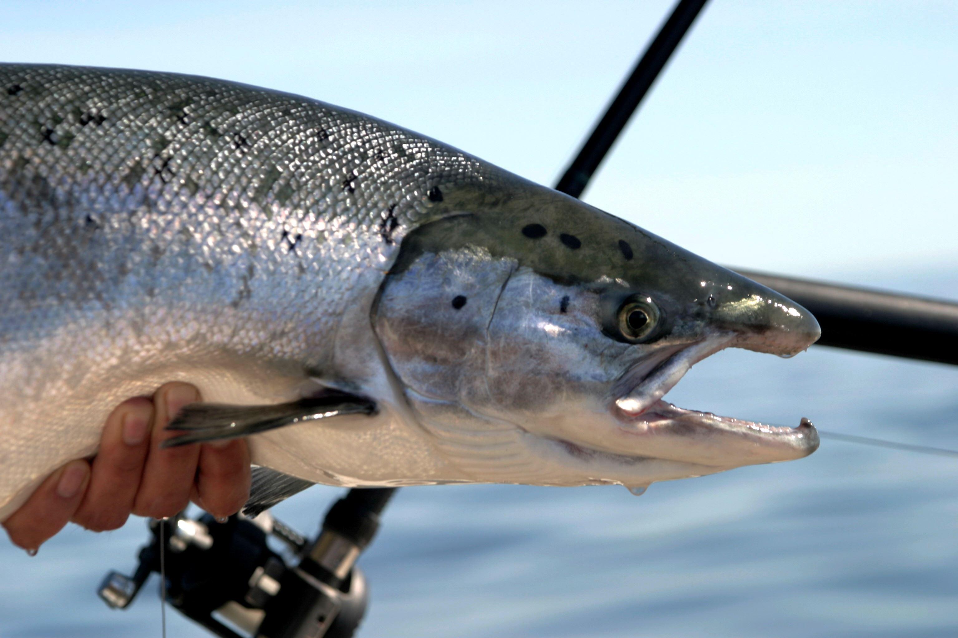 Hammaruddakortet Fiskekort