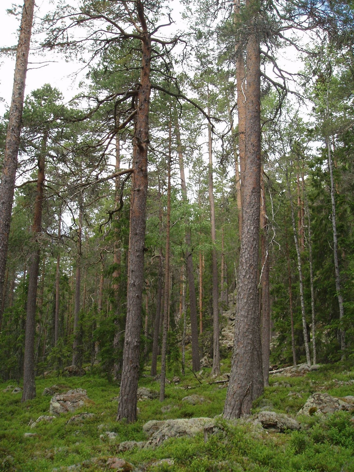 Barkbergsknopparna - Nature Reserve