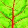 Blad Ecotopia