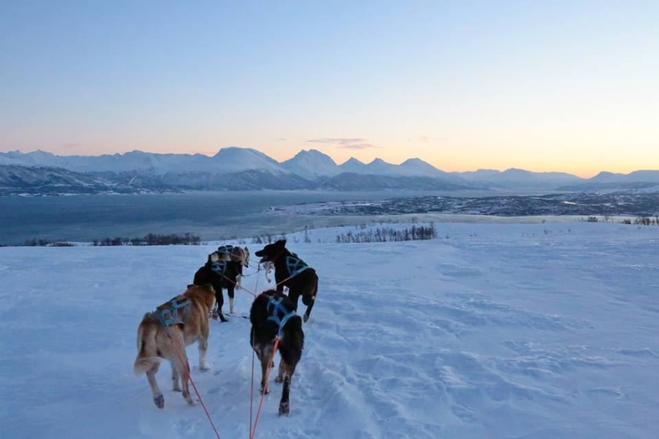 Ettermiddags Huskysafari – Arctic Adventure Tours