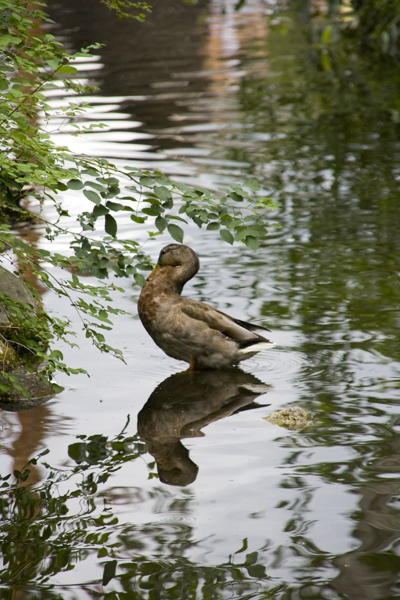 © fotoakuten.se, Andfågelräkning