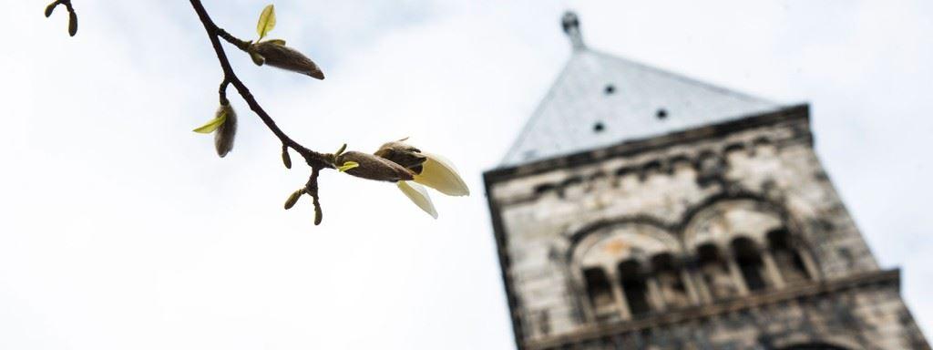 Guidad visning av Lunds domkyrka på engelska