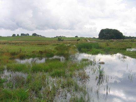 Benestad Backar Nature reserve (copy)