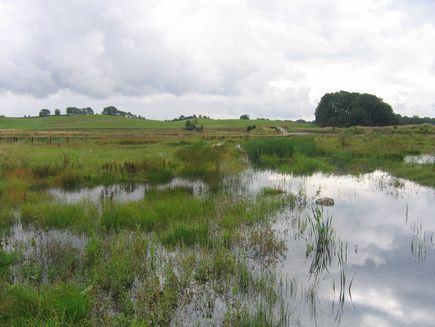 Borstakärrs våtmarker