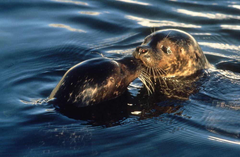 © Kjell Ove Storvik / Museum Nord, The Lofoten Aquarium