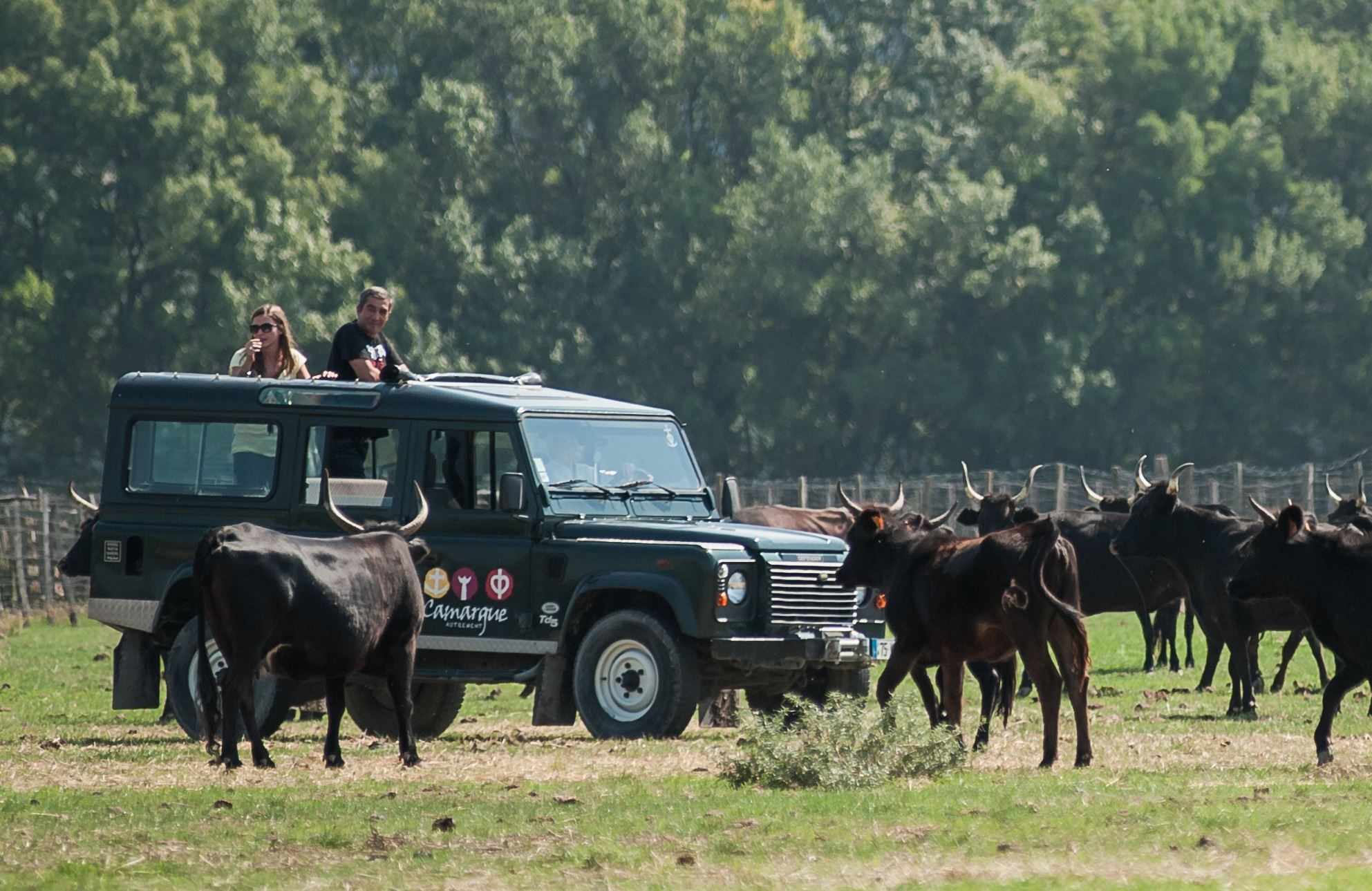 Safari in 4x4 - La Camargue Autrement