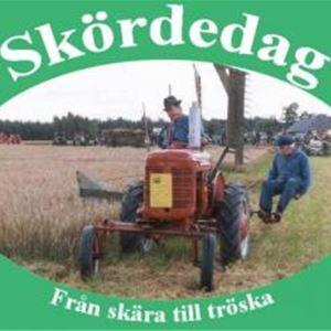 © Fam Nilsson Åkesholm, Skördedag från skära till tröska