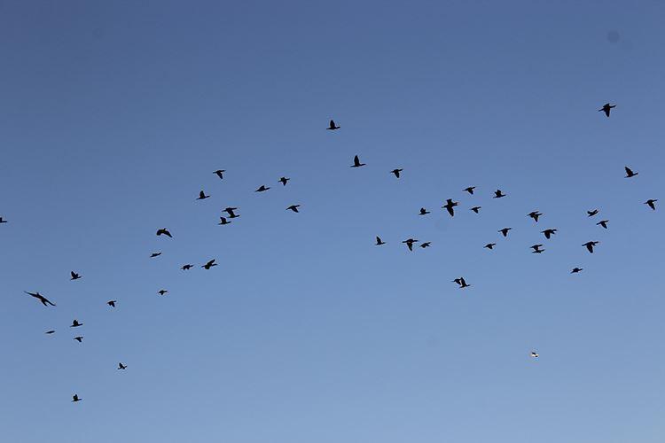 Sea Bird, Seals, Eagles by Zodiac - Winter – Tromsø Friluftsenter