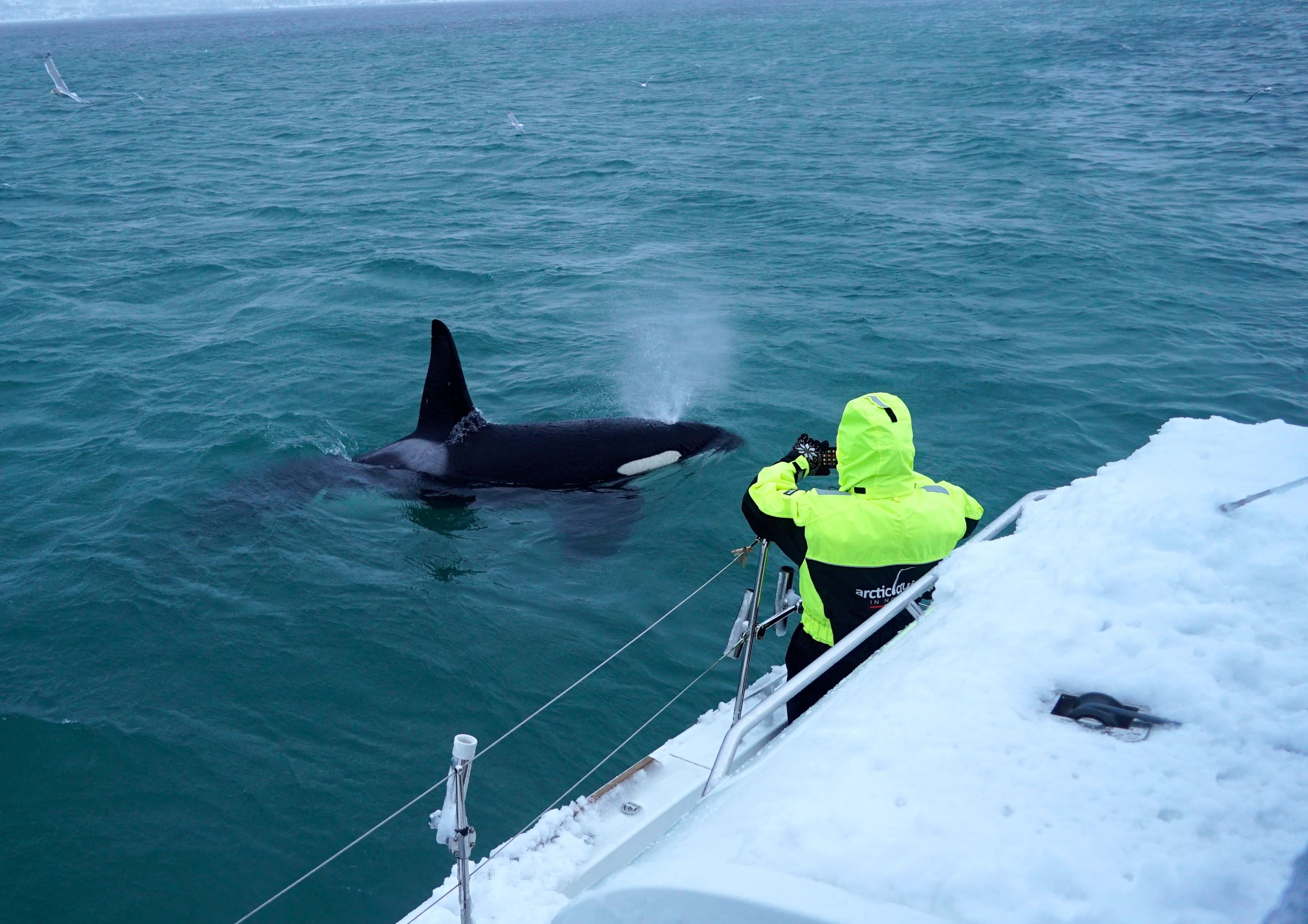 """Scenic Whale Watching from Luxury Catamaran """"Arctic Princess"""" – Arctic Cruise in Norway"""