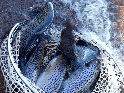 Fiskekort Väsmans Fiskevårdsområde