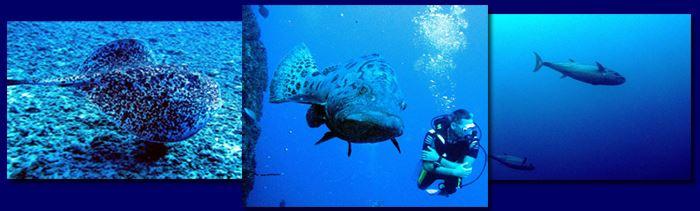 Plongeur autonome équipé : exploration