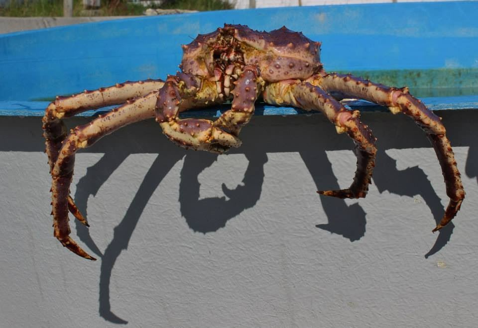 The King Crab and Fishing Experience
