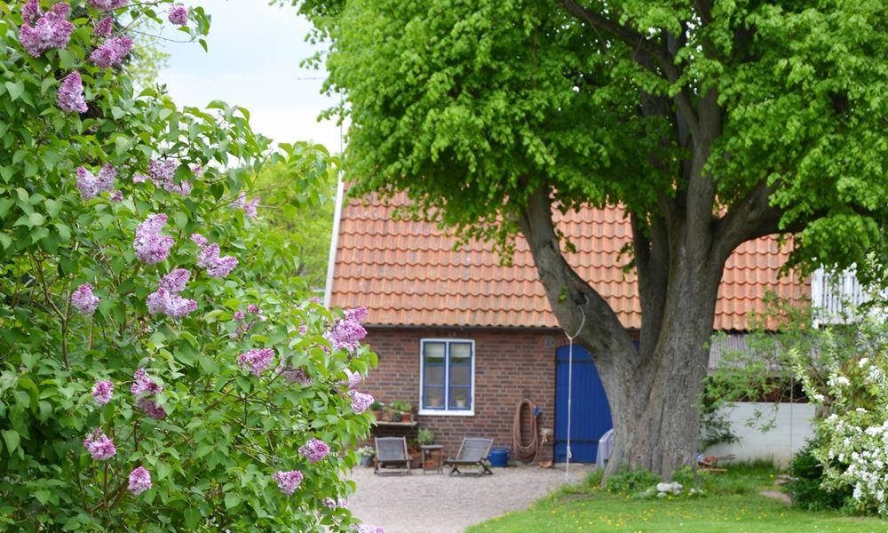 Foto: Lindtorpet, Lindtorpets gästhus i Arild