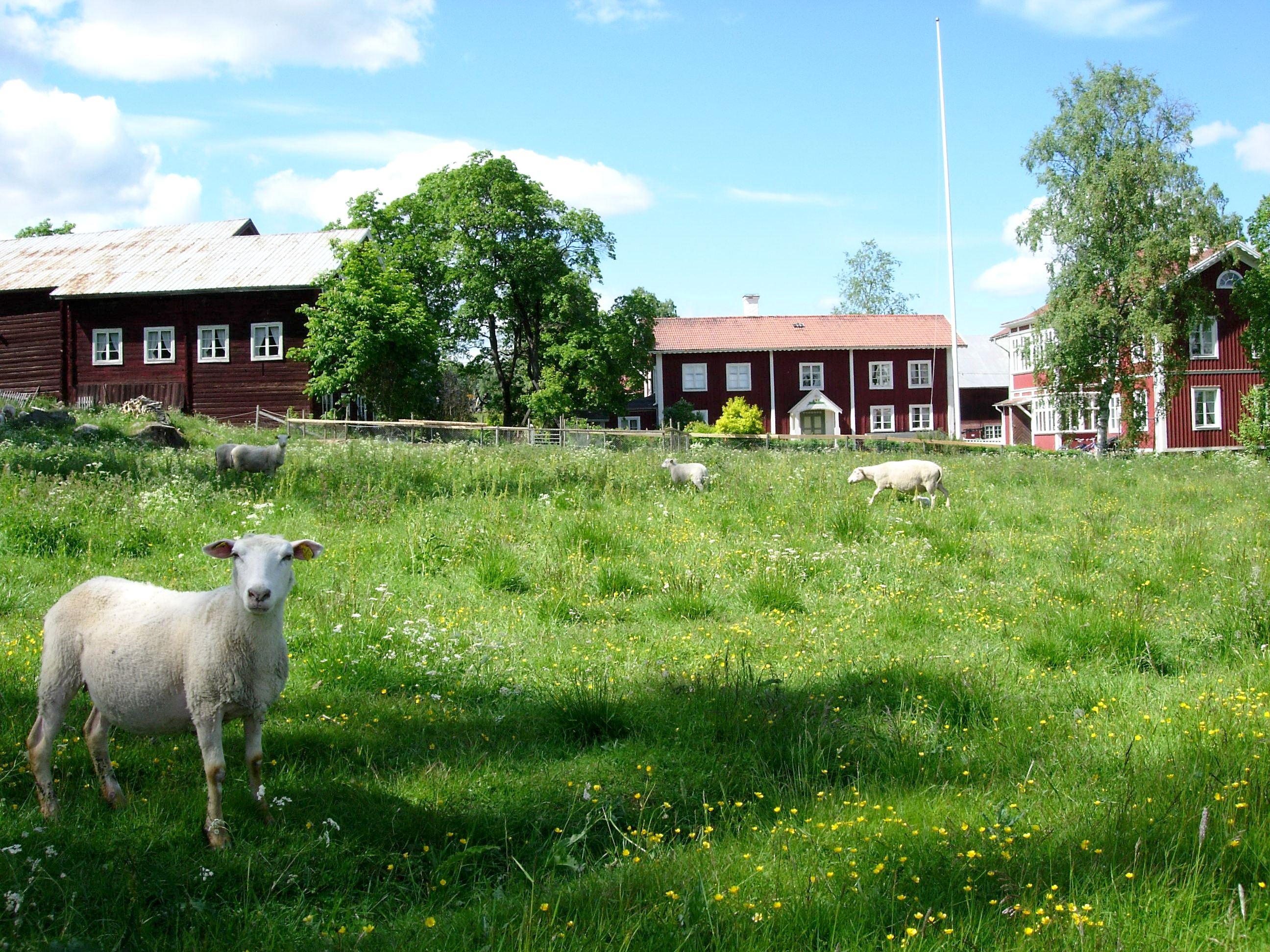 Ersk-Anders, Skästra, Järvsö