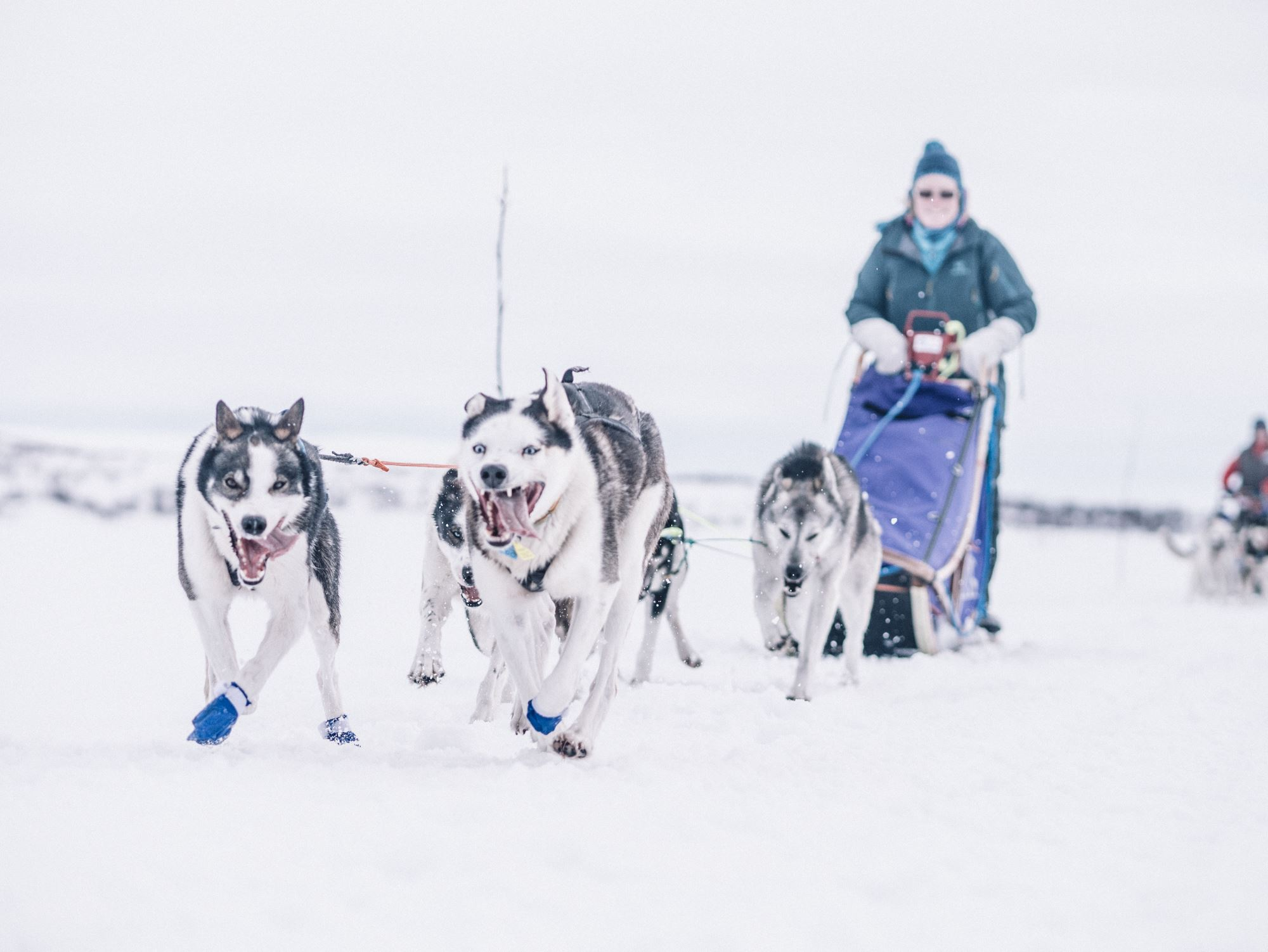 4-days trip dog sledding / Trasti & Trine
