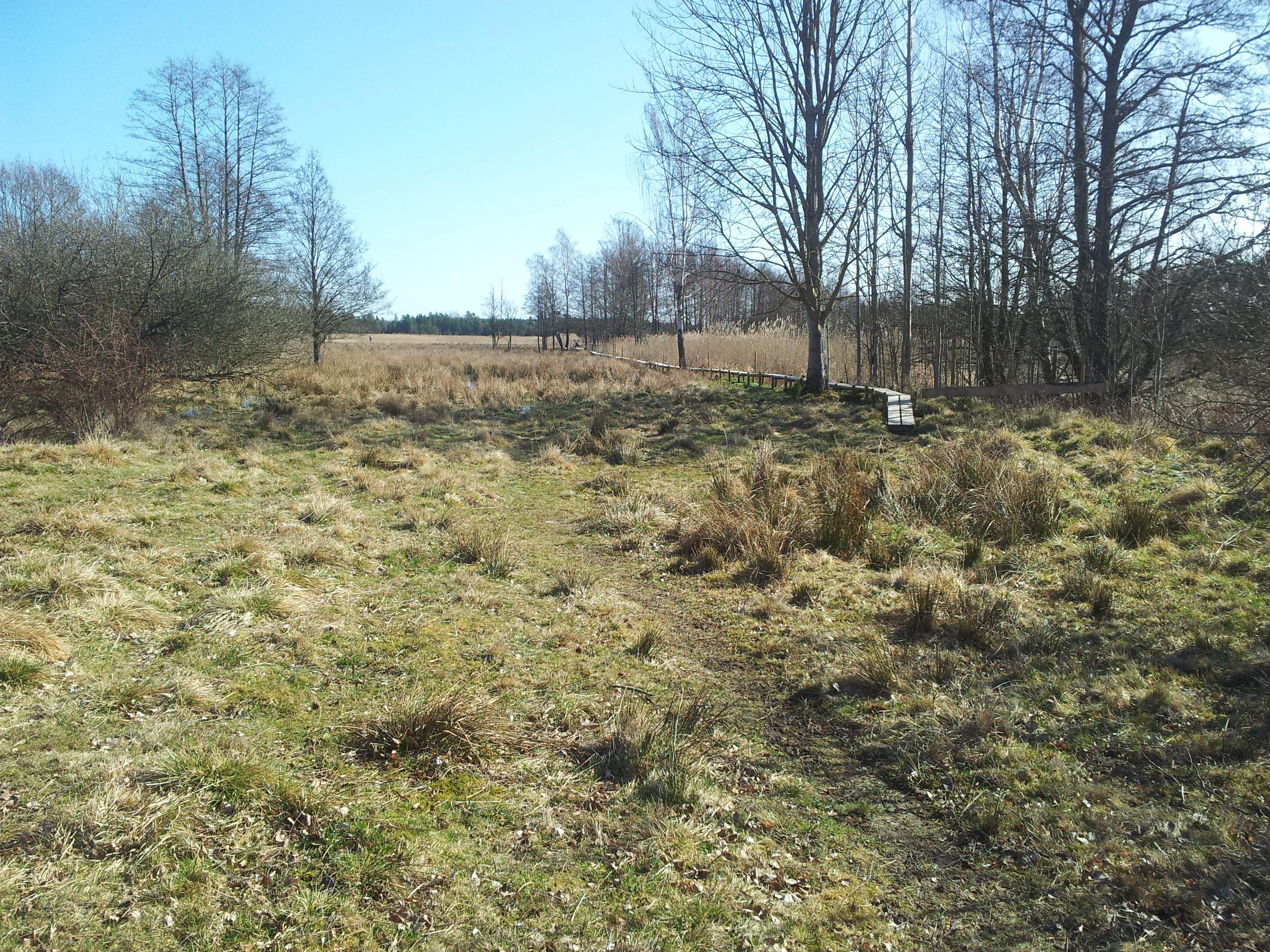 Kronobäcksleden i Kronobäcks våtmark