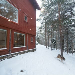 The Wolf hotel - unique accommodation