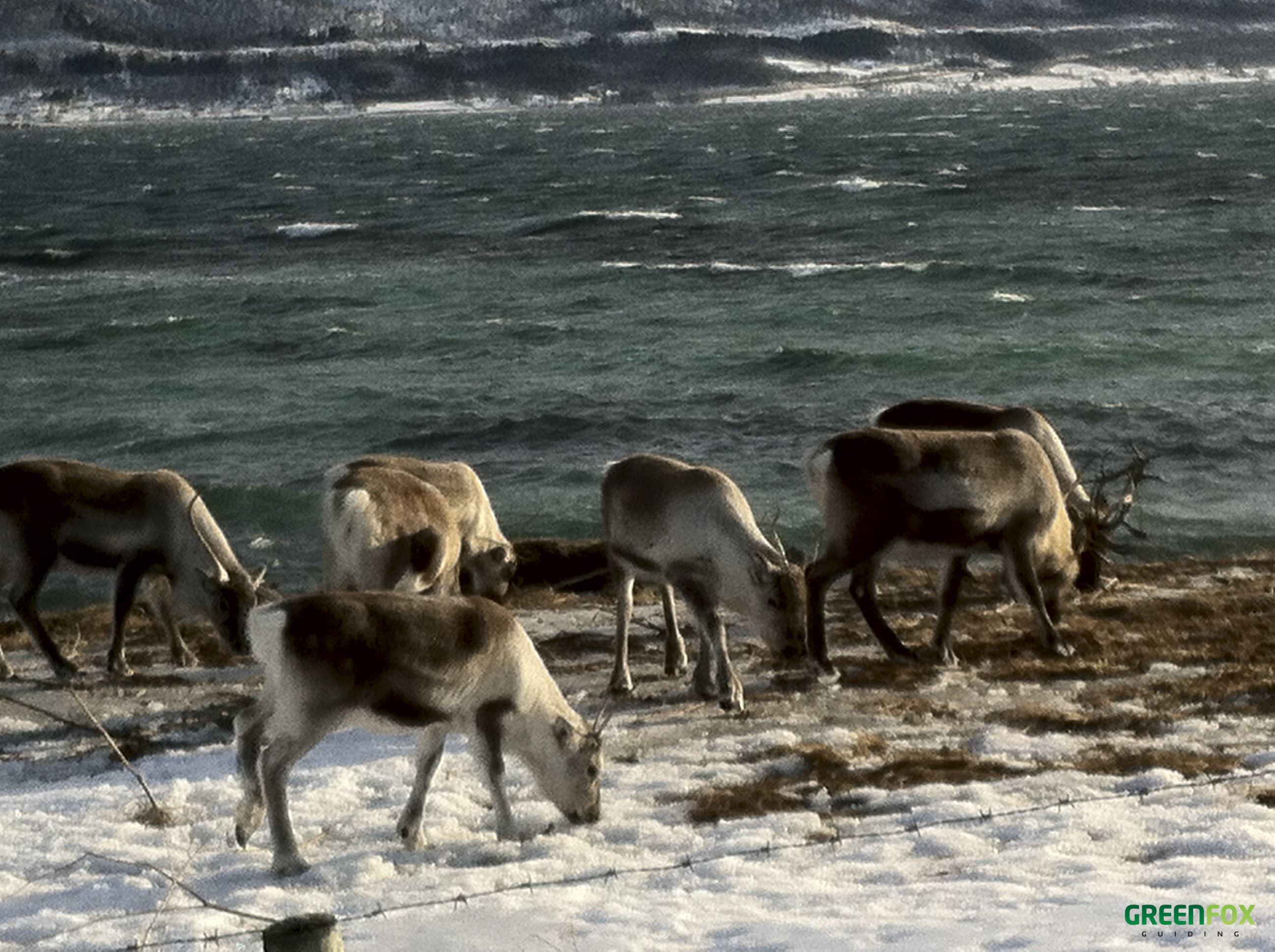 Fjordtur med bil – Green Fox Guiding