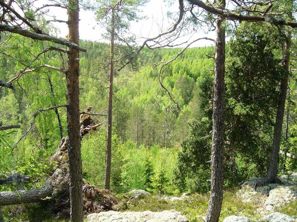CEU,  © CEU, Ilsbo fornborg