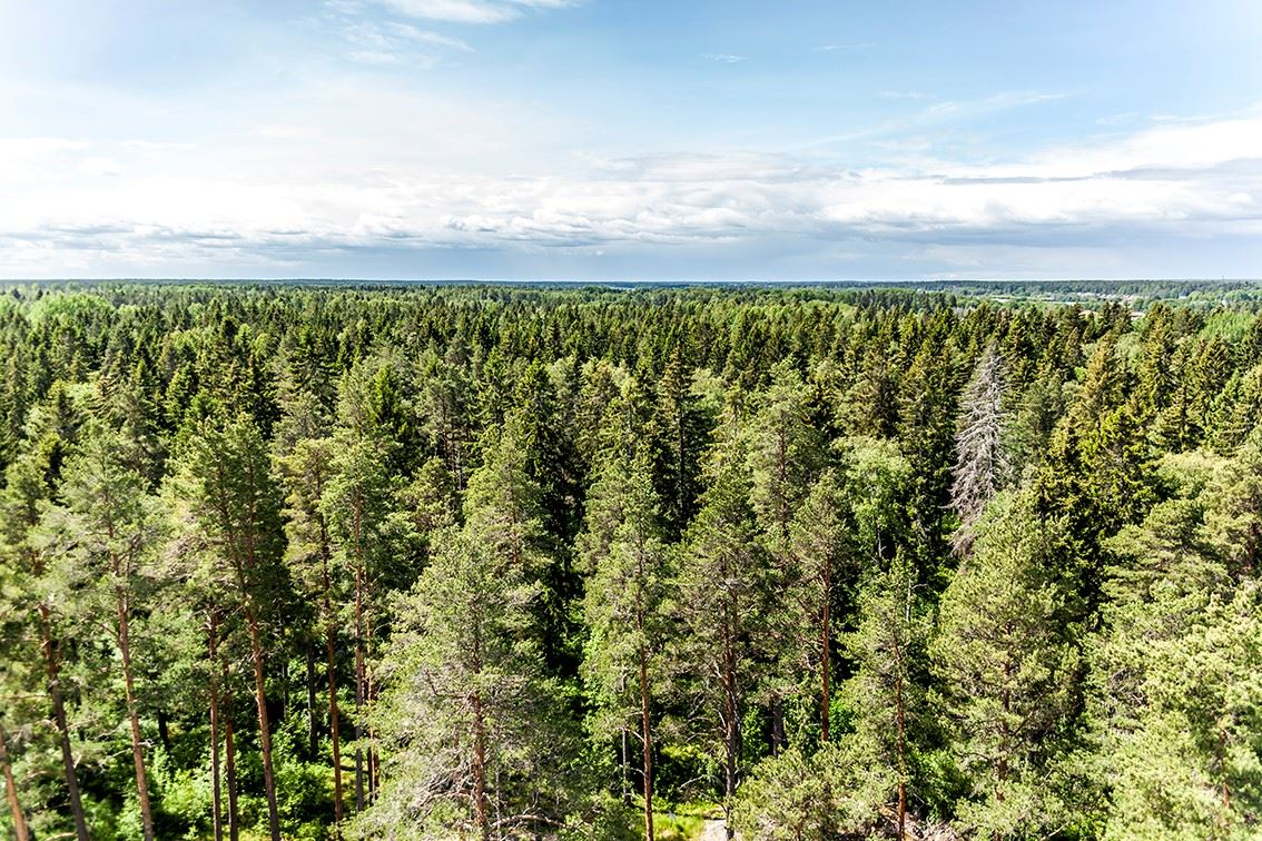 7-day walking in the wilderness of south Norrland.