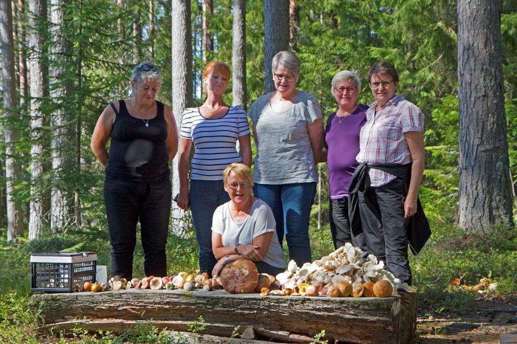 Svampexkursion, Långvind, Hälsingland