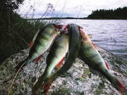 Borrsjöåns Fiskevårdsområde
