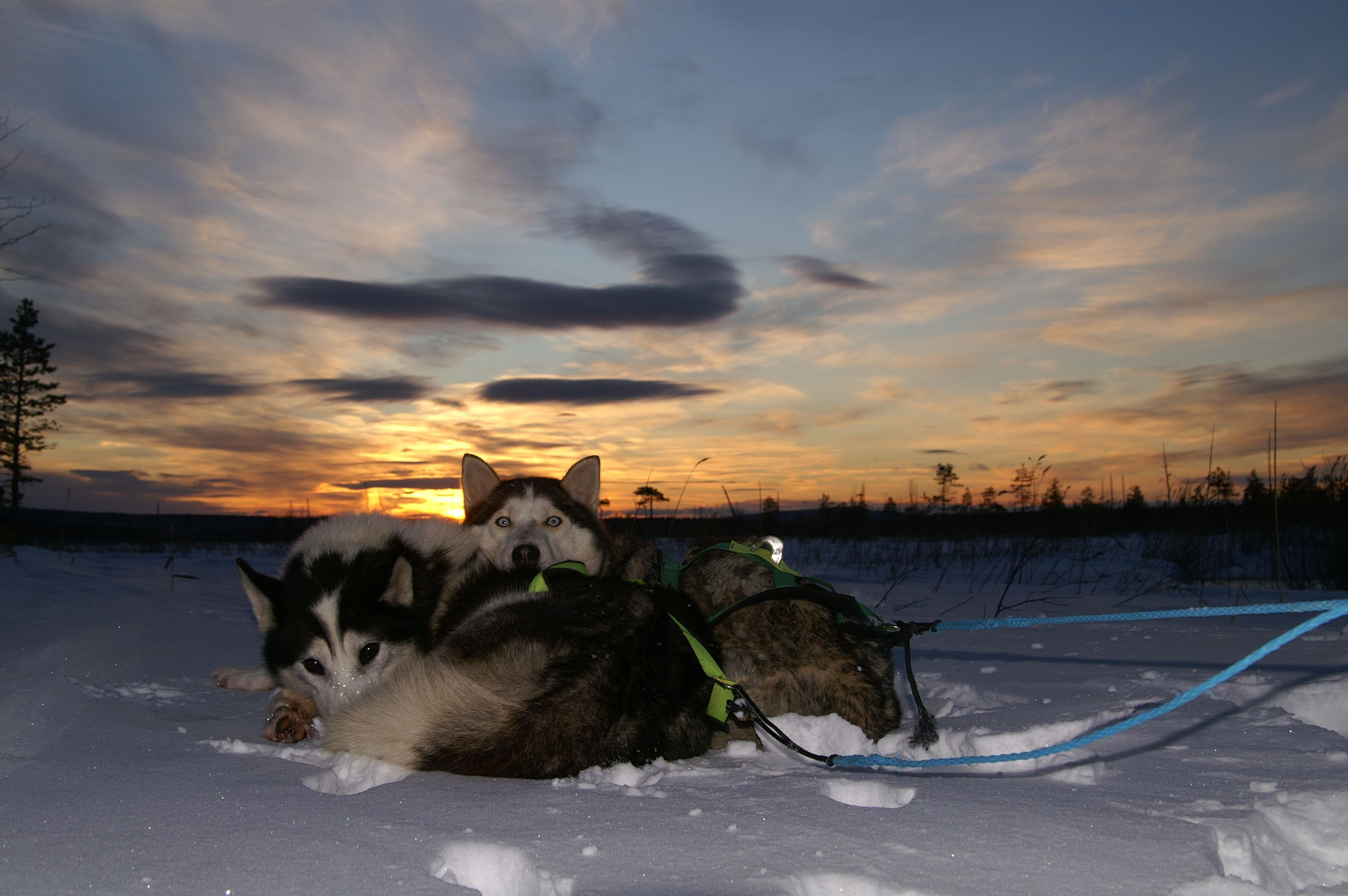Mushing with Aurora Borealis Adventures