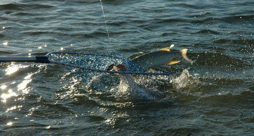 Rundbergs stugor, fiskeguide