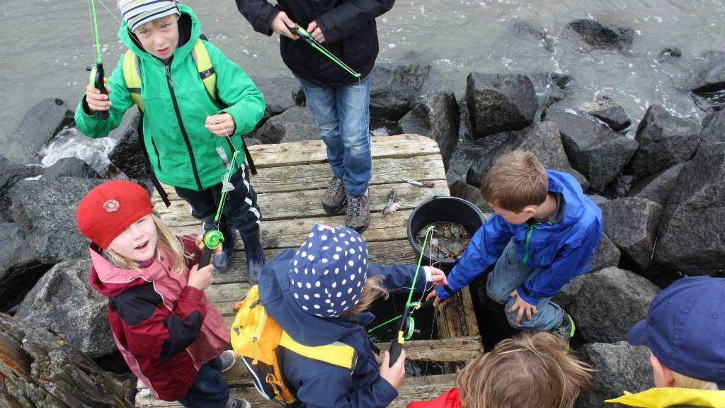 Crab hunt with Club Fanø