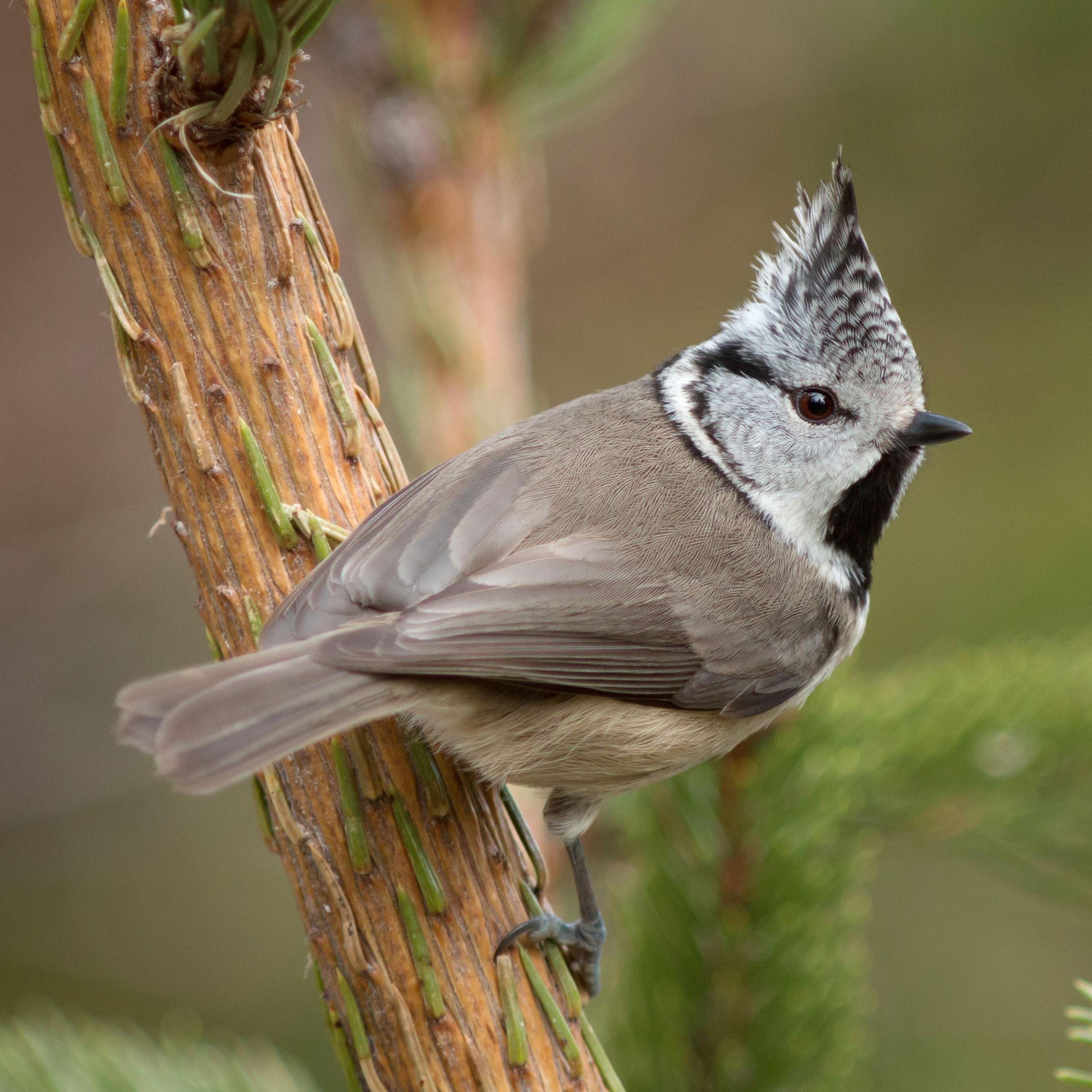 Fågelmatning på naturum Dalarna