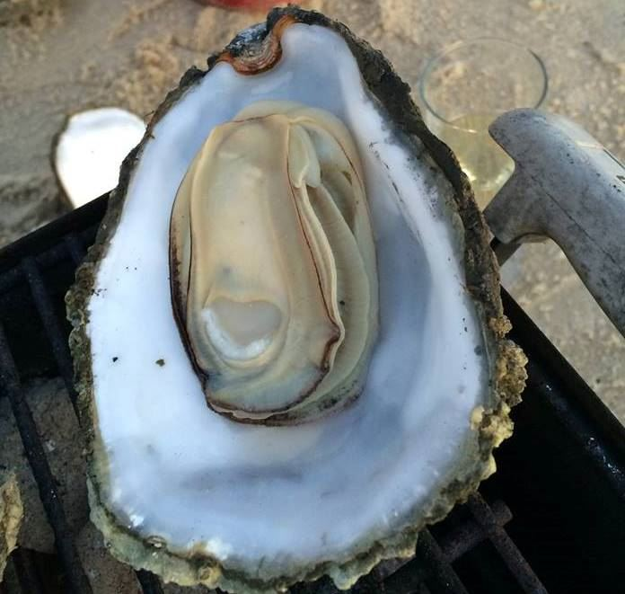 Oyster tour