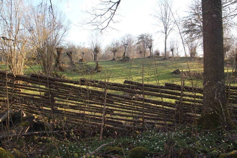 Eino Blixt, Hamlade träd och hägnade gärdesgårdar i Humlenäs