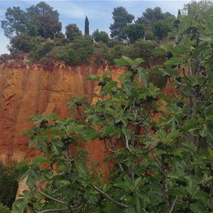 Special Lavender Tour F2: Fontaine de Vaucluse/Abbaye de Sénanque (photo stop)/Gordes/Roussillon/Sault - Provence Travel