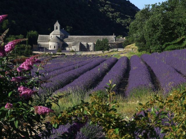 Lavender Tour H2 Half Day - Gordes(photo stop)/Sault Provence Travel