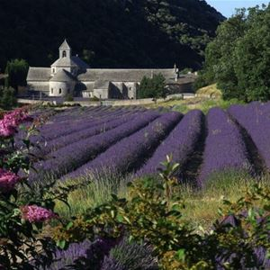 Lavender Tour H2 Half Day - Provence Travel