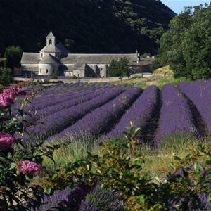 Lavender Tour H2 Half Day - Gordes(photo stop)/Sault Provence Travel