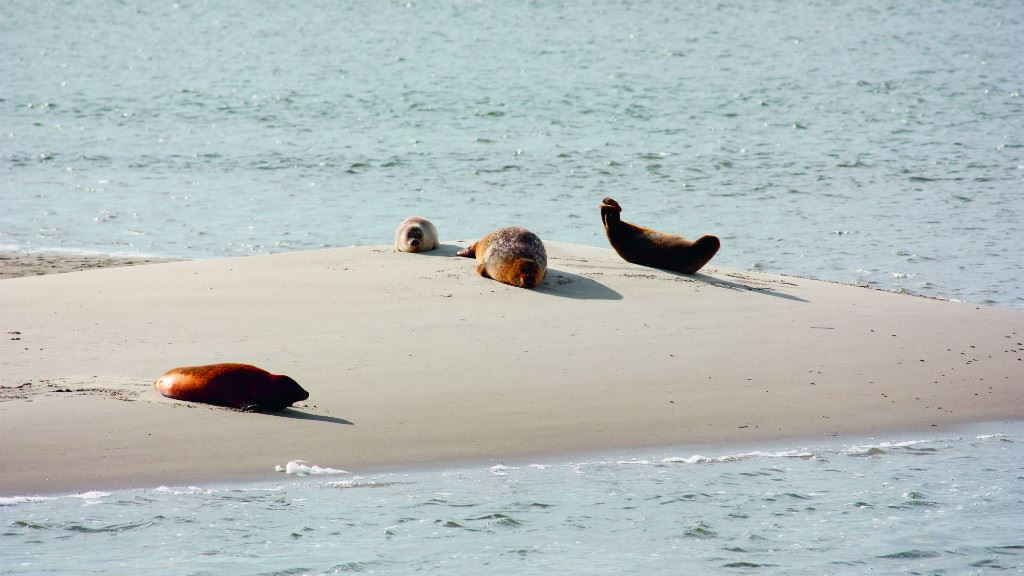 Club Fanø Seal Safari