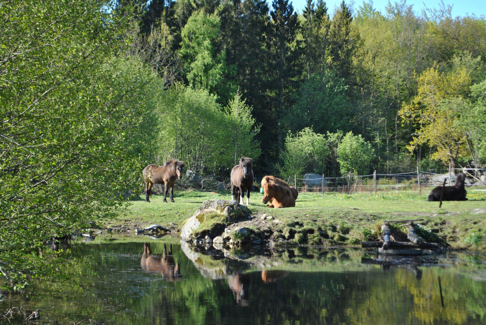 Äppelgården, Äppelgården - Pferdestall