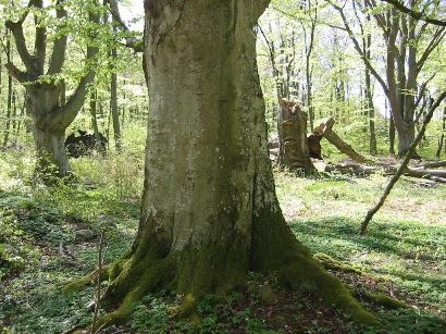 Hjärthalla - naturreservat