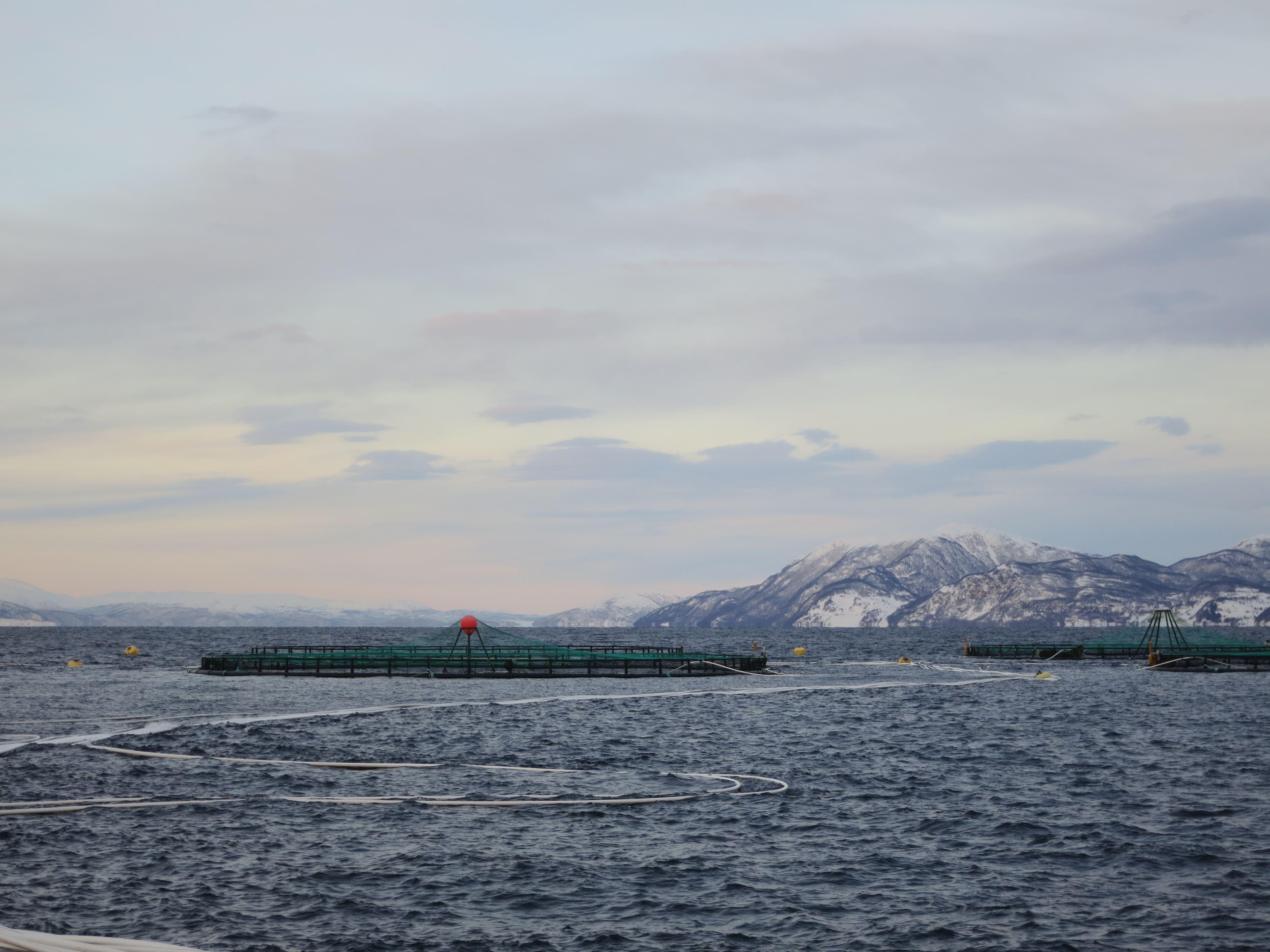 The Sound of Salmon day tour - Tromsø Budget Tours