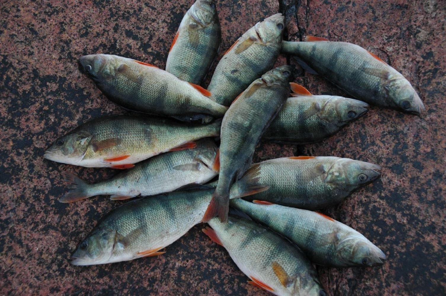 2-dygns fiskepaket för 4 personer (1 båt)