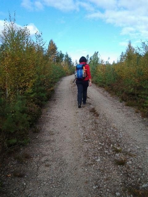 Vandringsled i Tyngsjö